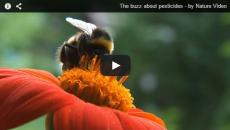 הדברת דבורים בשיקול אקולוגי