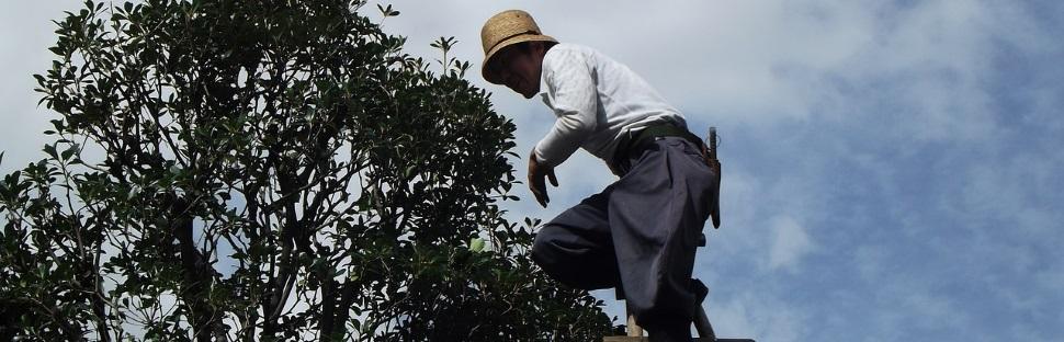 גיזום עץ תפוז