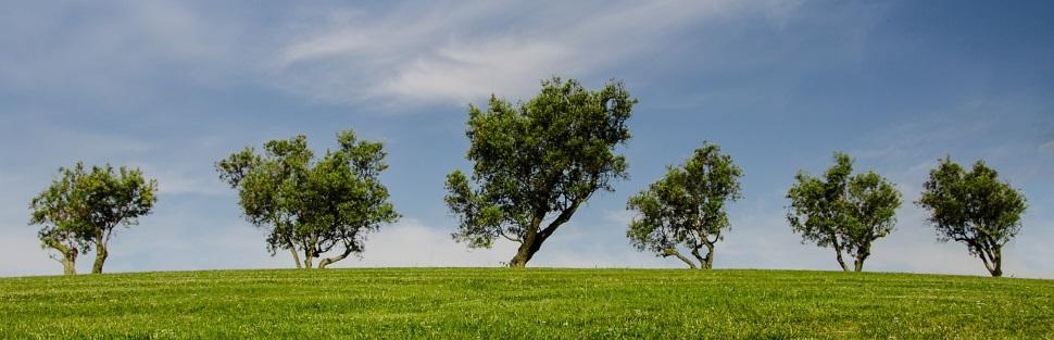 חברת גיזום וכריתת עצים