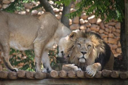 גן החיות התנכי ירושלים